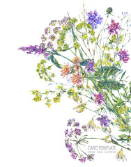 Watercolor summer wildflowers. Botanical colorful illustration