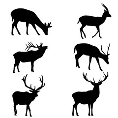 Some forms of deer silhouettes