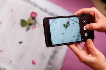 On the foreground, hands hold a phone and photograph a still-life from a flower lying on a gray photophone. Pink and purple colors.