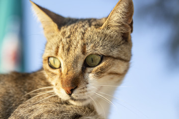 Portrait of a stray cat. Close up