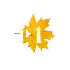 Figure 1 is cut from yellow maple leaf