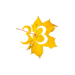 Figure 3 is cut from yellow maple leaf