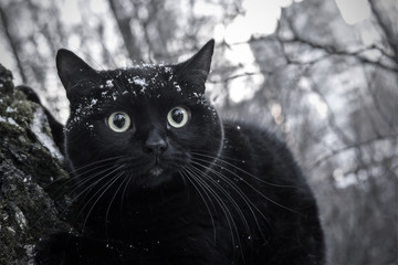 Black cat sitting on the tree of the city Park on the background of winter landscape