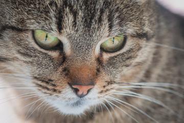 Macro cat muzzle