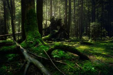 Dark rainforest landscape.