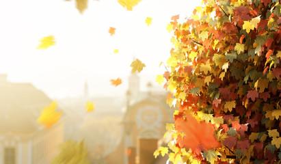Herbst in der Stadt Wall mural