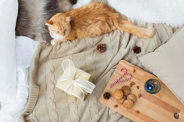 Fototapete - pets, hygge and christmas concept - red tabby cat lying on blanket with gift, oatmeal cookies and candle at home