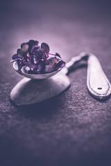 Violette Kresse