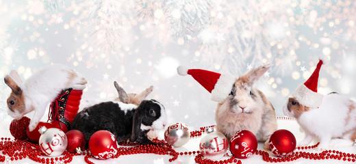 christmas bunnys