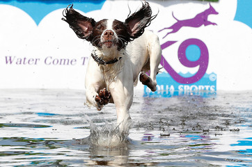 A dog jumps into a swimming pool to retrieve a ball during the Chatsworth House Country Fair near Edensor