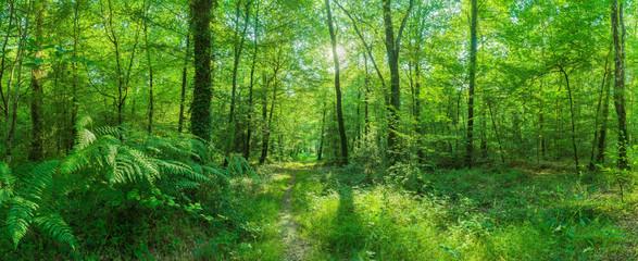 Landschaft zauberhafter Laubwald mit Fußweg im Frühling im Gegenlicht - Landscape of enchanting...