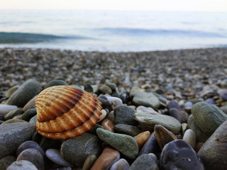 Clam on the rocks by the shore