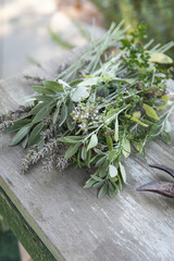 Fresh picked bundle of herbs