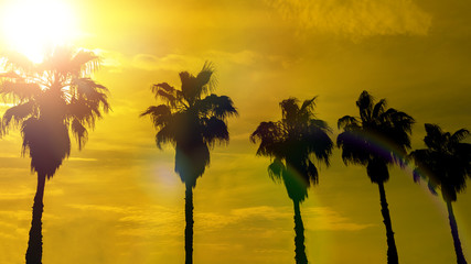 palm trees against the background of the evening sky, the setting sun. tropics, resort, nature, vacation