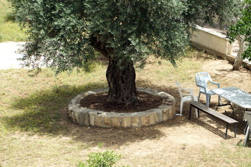 a cozy patio with an olive tree and a place to relax. Table and chairs