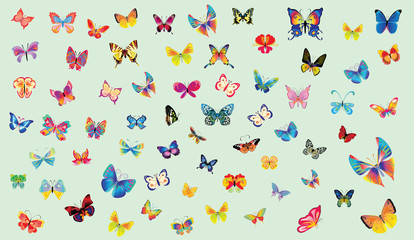 Big collection of colorful butterflies