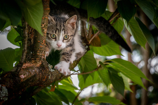 Curious Kitten in a tree