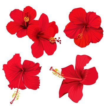 hibiscus flower vector clip art set of 5 red flowers tropical planrs