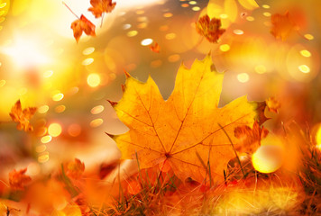 autumn leaf ahorn