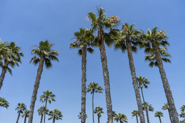 Palm trees in the sun