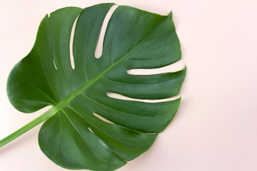 Top view green tropical leaf on pastel pink background