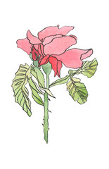 Watercolor pink red rose flower with leaves