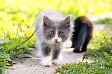 Little kitten in a garden.