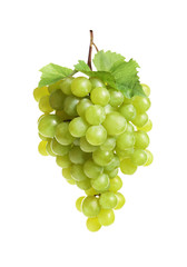 Bunch of fresh ripe juicy grapes on white background