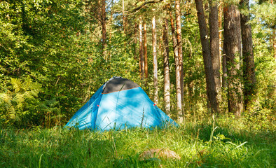 Blue camping tent in the forest in bright sunny day
