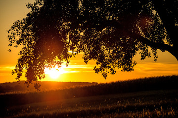 sunset in summertime with tree and meadow