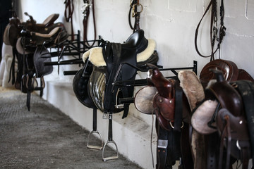 Leather horse saddles and equipment resting on hangers in tack room