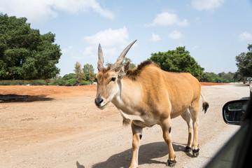 Morning Tour at Ramat Gan Safari Park