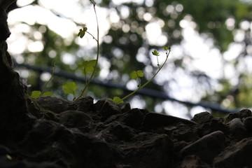 Macro pianta erba giardino buco roccia Osimo, Italy