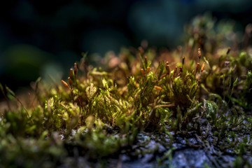 Moss in a tree lit by the sun. Macro photo