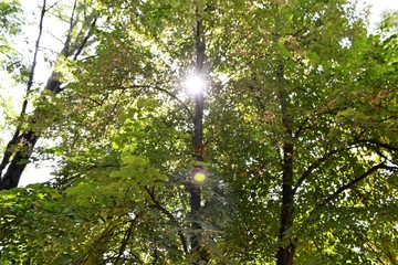tree, forest, nature, green, trees, sky, leaves, wood, summer, landscape, park, leaf, sun, foliage, branches, spring, sunlight, woods, natural, plant, environment, branch, light, blue, pine