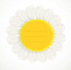 Daisy flower with a large yellow center pimpled under the text on white background