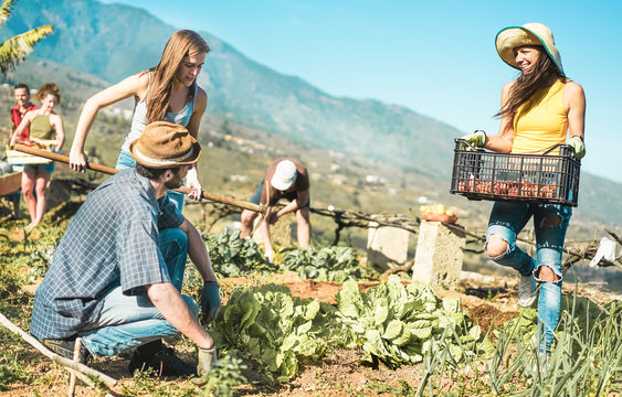 Teamwork harvesting fresh vegetables in the community greenhouse garden
