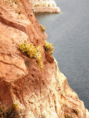 Yellow flower growing on the side of a cliff over the water