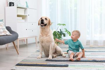 Adorable yellow labrador retriever and little boy at home