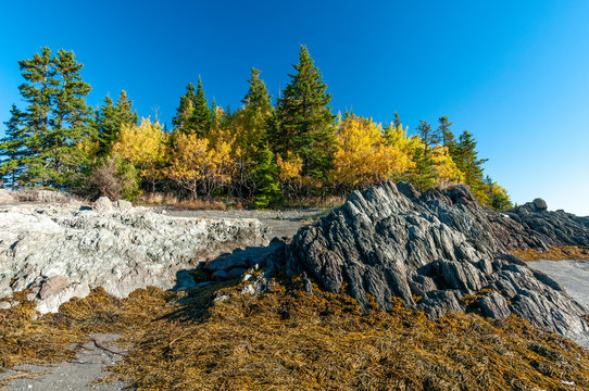 rocks, algae and forest in autumn colors on the shore of the St. Lawrence River in Bic Park at low tide