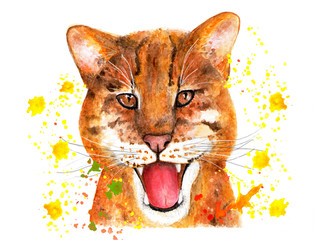 Portrait of a catopuma temminckii. Watercolor illustration.