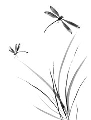 Dragonfly and grass. Watercolor and ink illustration in style sumi-e, u-sin, go-hua Oriental traditional painting. Isolated .