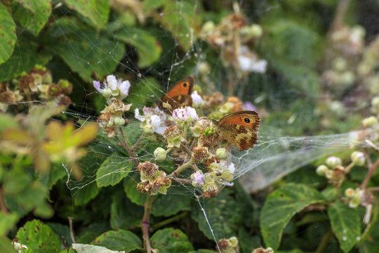 Butterflies resting