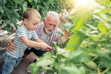 Grandfather and grandson working in greenhouse
