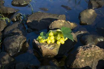 Weintrauben auf einem Stein in Wasser