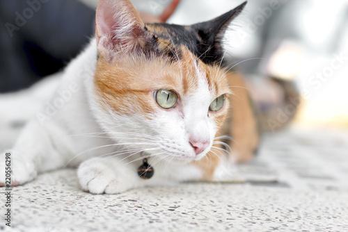 08d18226de2 Calico cat, Cute tortoiseshell cat eye looking something