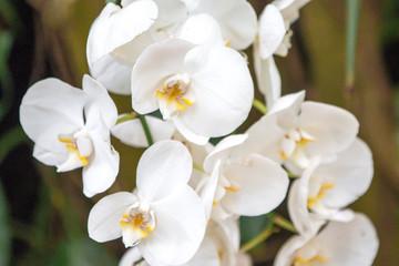 Orchideen Orchideengewächse (Orchidaceae)
