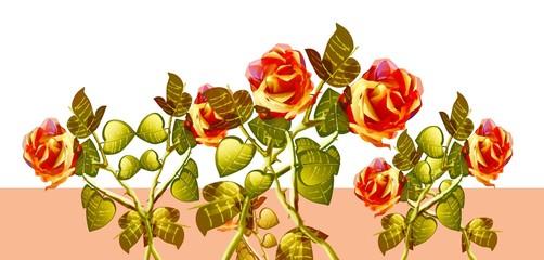 Rose, progetto grafico.