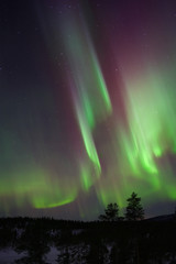 Aurora Borealis, Northern Lights, above boreal forest in Lapland, Northern Finland.