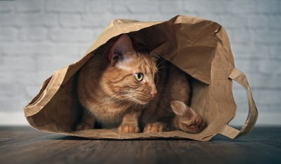 Cute ginger cat sitting in a paper bag and looking curious sideways.